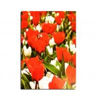 Доска разделочная ДР-24 декор тюльпаны